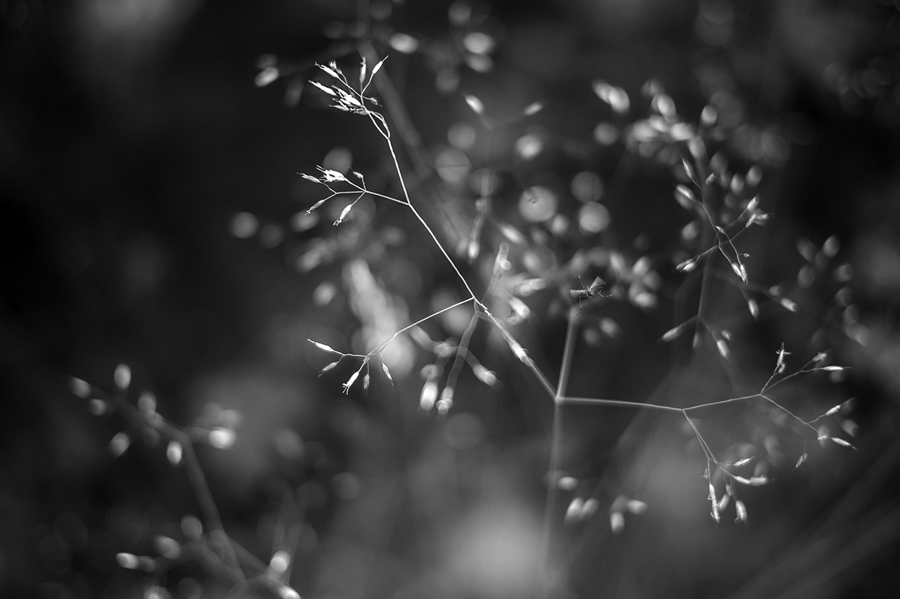 Delicate Grass | Maine